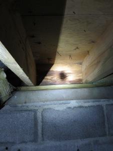 Termite Shield on foundation